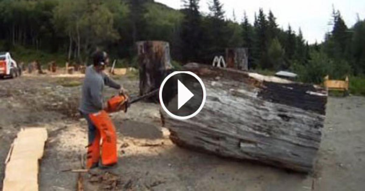 Using Chainsaw This Guy Has Made Phenomenal Scene Out Of Wood. Amazing!!..