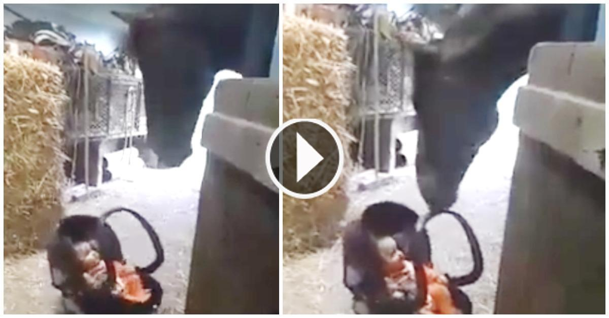 How A Baby Girl Is Left To Look After To A Horse By Her Mother. Let's Have A Look!!