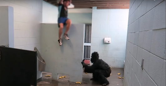 Escaped Gorilla Bathroom Prank look! how the guy frightens all in the bathroom feigning of an