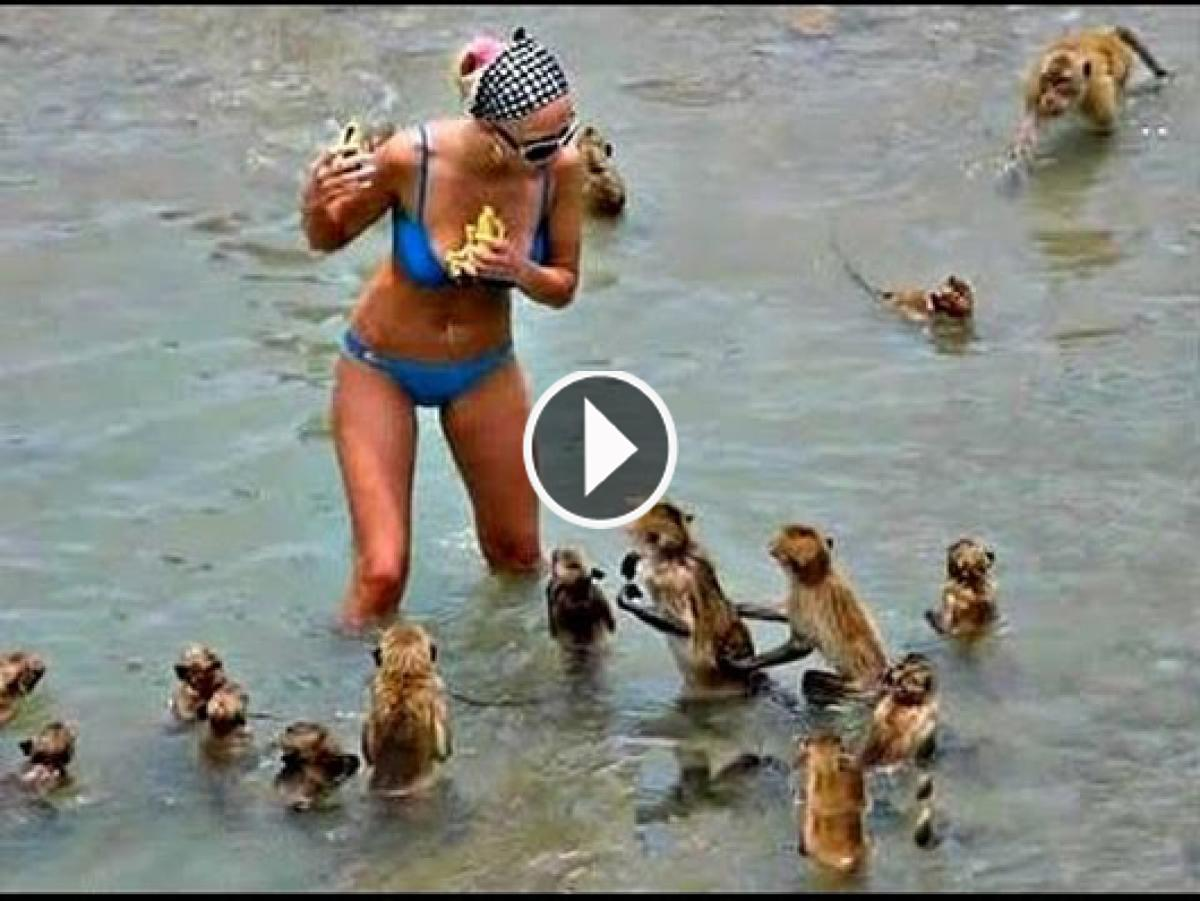 You Can Not Help Laughing After Watching These Best Funny Animals And People Videos Compilation!! ....