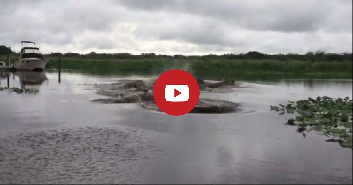 You Will Not Ever Dare To Swim In This River After Seeing The Footage. It Will Thrill Your Fur. Watch!!