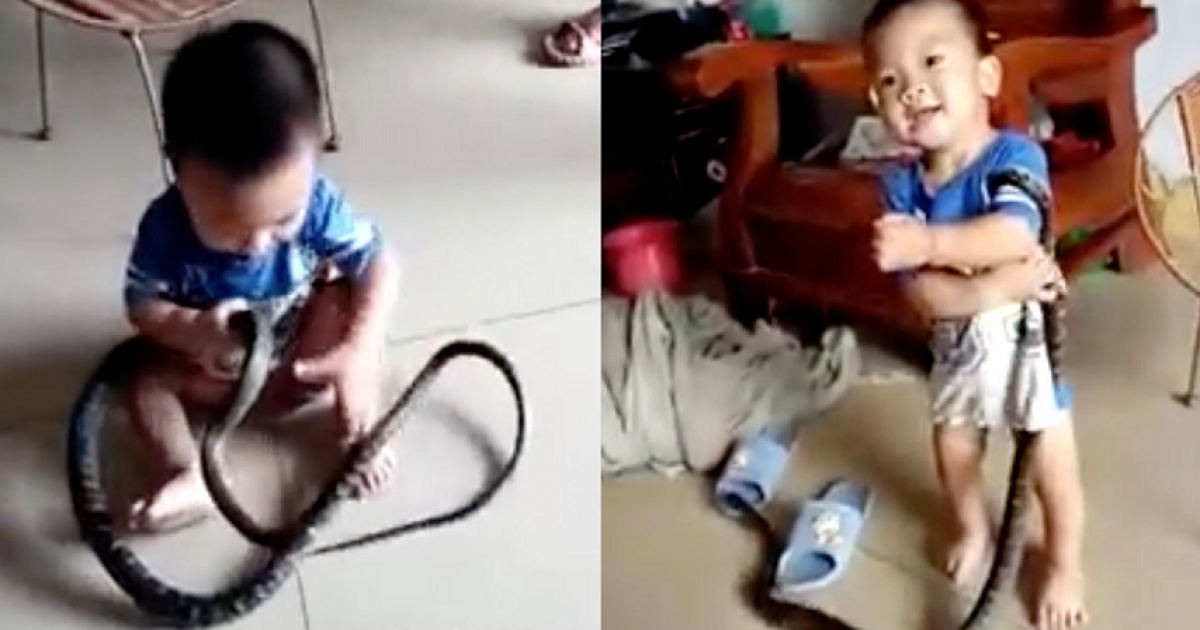 Terrifying Moment Adorable Toddler Cannot Stop Laughing As He Plays With Wild Snake Thinking It Is His Toy.