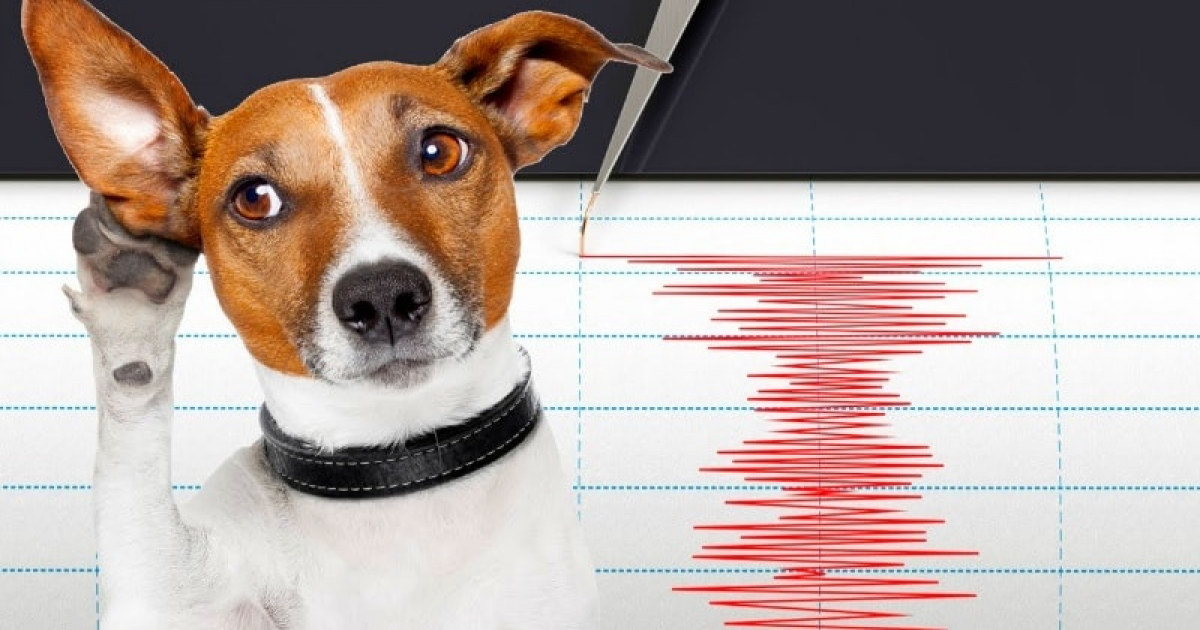 Animals Predict An Earthquakes Before They Happen- Is The Theory Or Concept True?