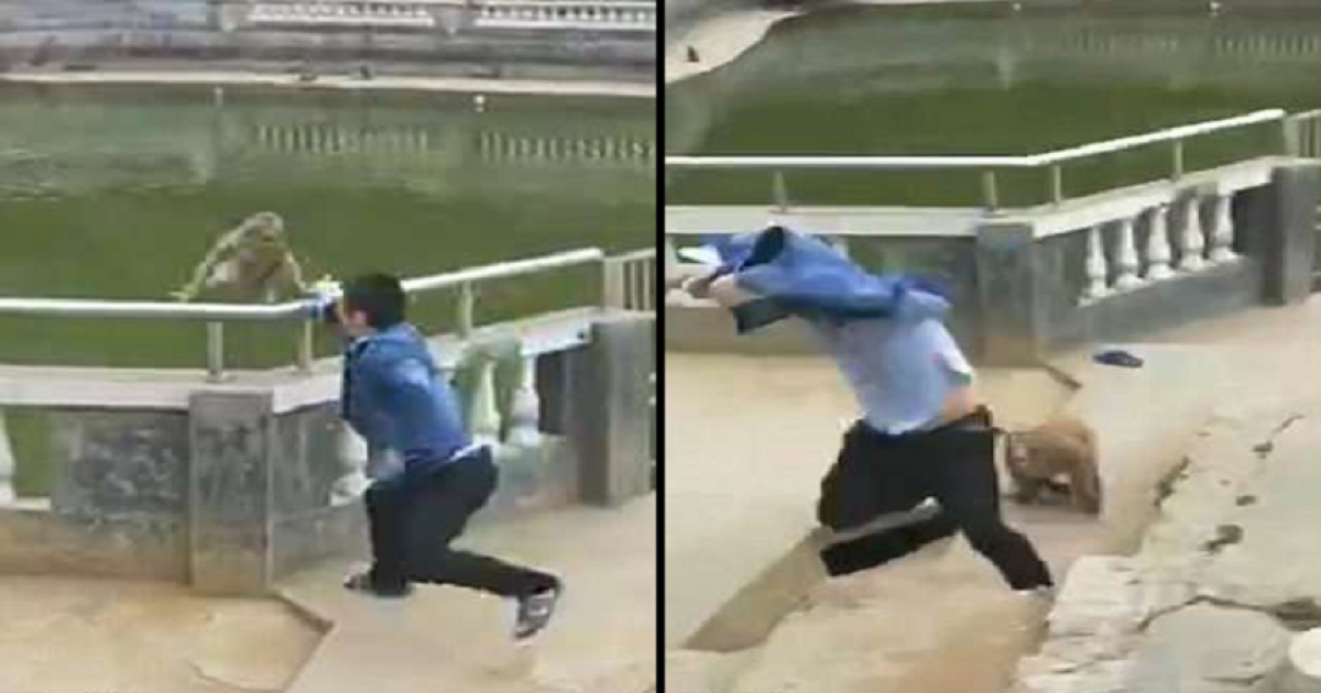 Furious Monkey Gets Revenge After Tourist Tries To Push It Off Into Pond From Railings.