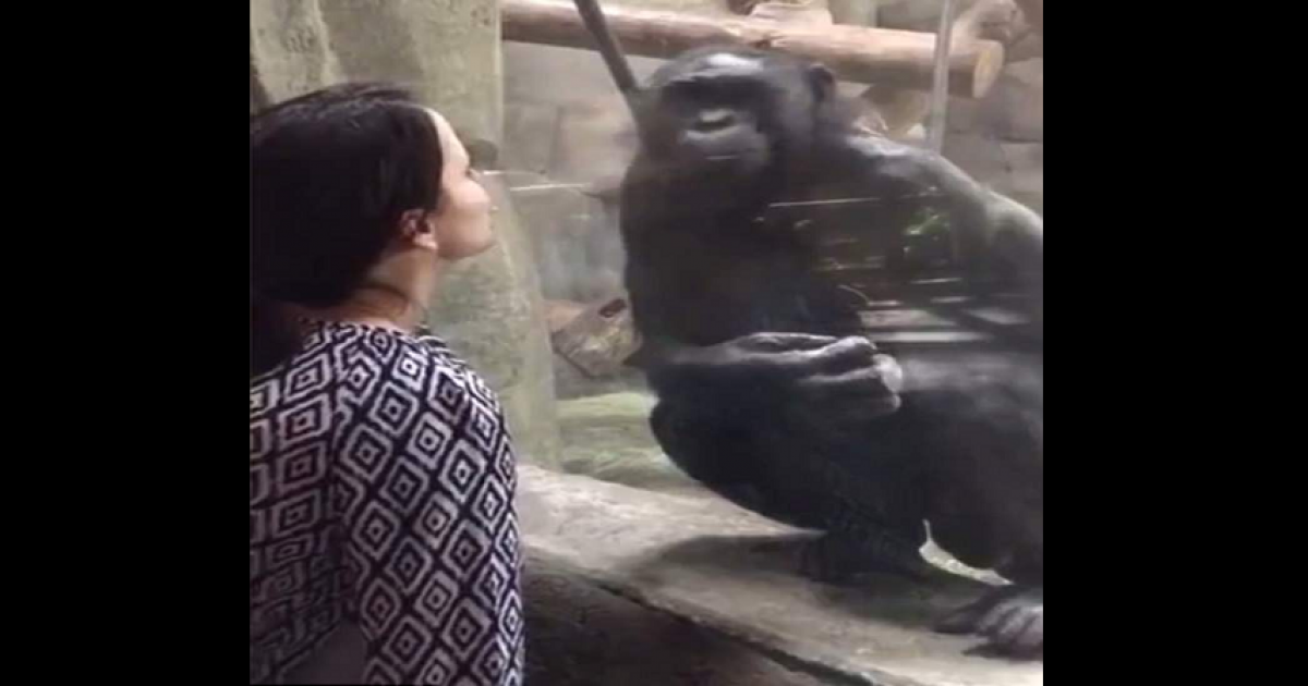 Woman Gives Monkey Kiss But Gets Denied With Poop In Return At Zoo.