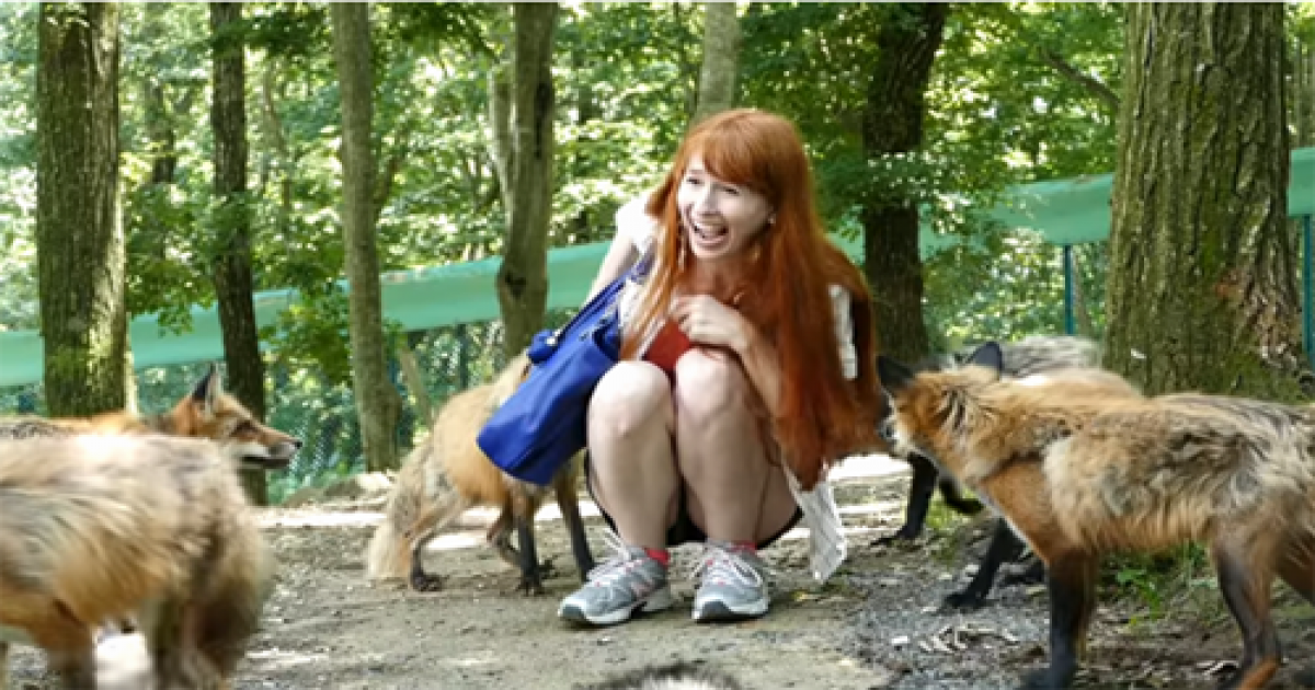 Girl Is Attacked By Dozen Of Wild Foxes, But She Couldn't Stop Her Laughter.