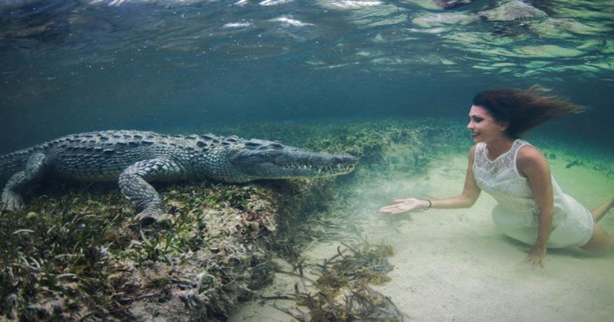 Italian Model Swimming Dangerously Close To Deadly Crocodiles In An Underwater Photo Shoot.