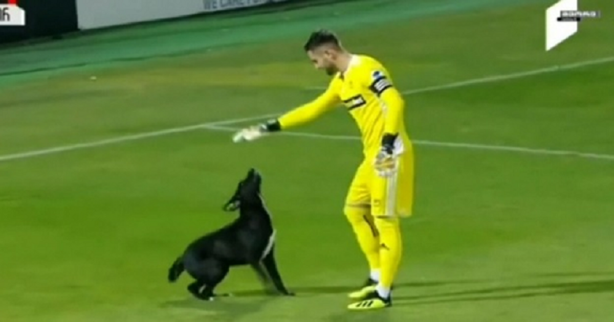Stray Dog Interrupts Football Match For Long, Demands Belly Rubs